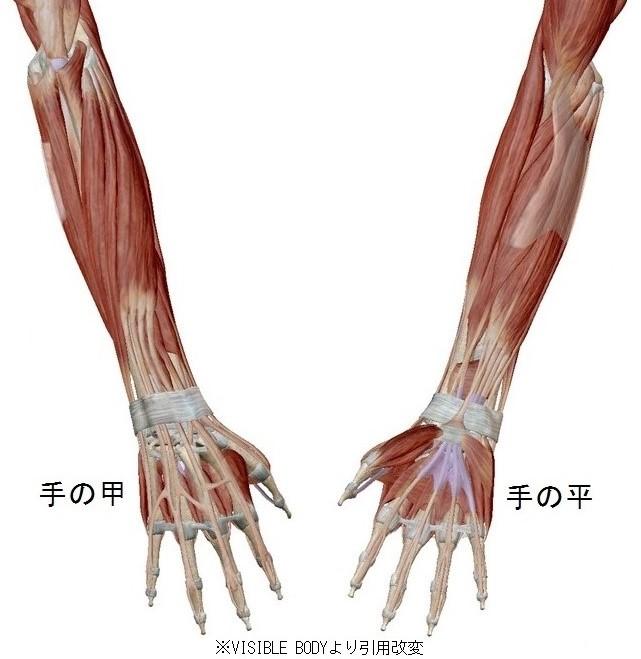 TEETER TOTTER腱鞘炎1
