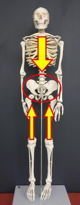 産後 骨盤ケア 肩こり 腰痛 セルフケア1